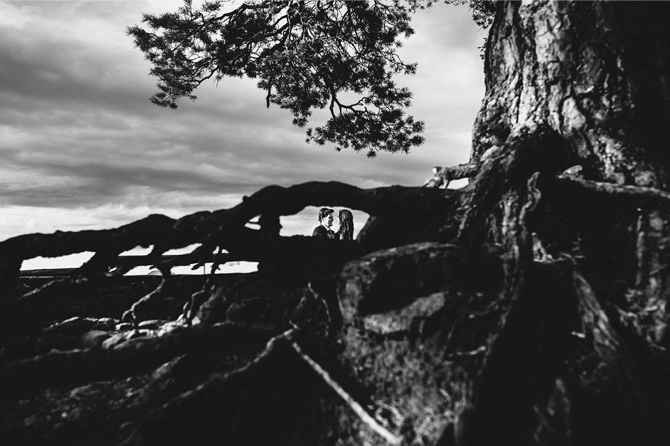 raiz-arbol-naturaleza-fotografia-boda-huesca
